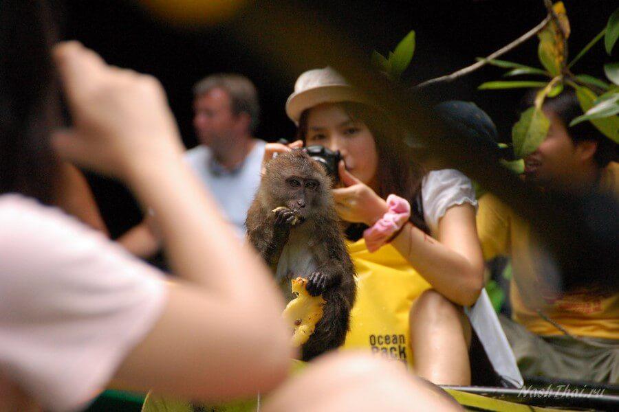 Туристы с обезьянкой