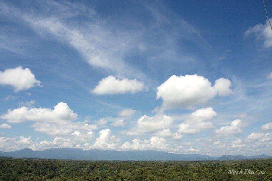 Лес, небо
