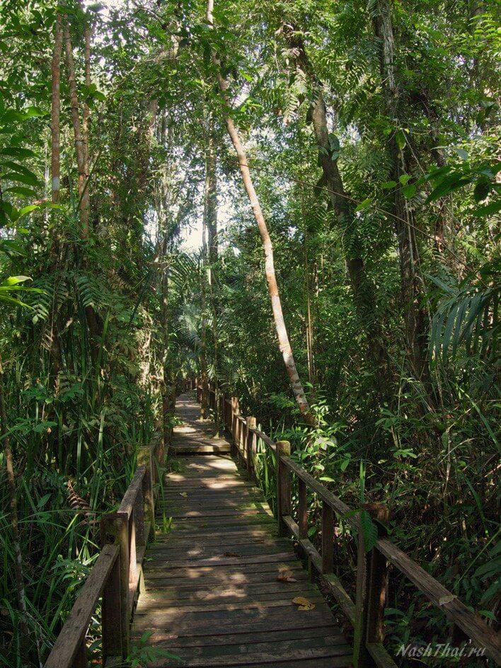 Тропический лес, парк Таиланда
