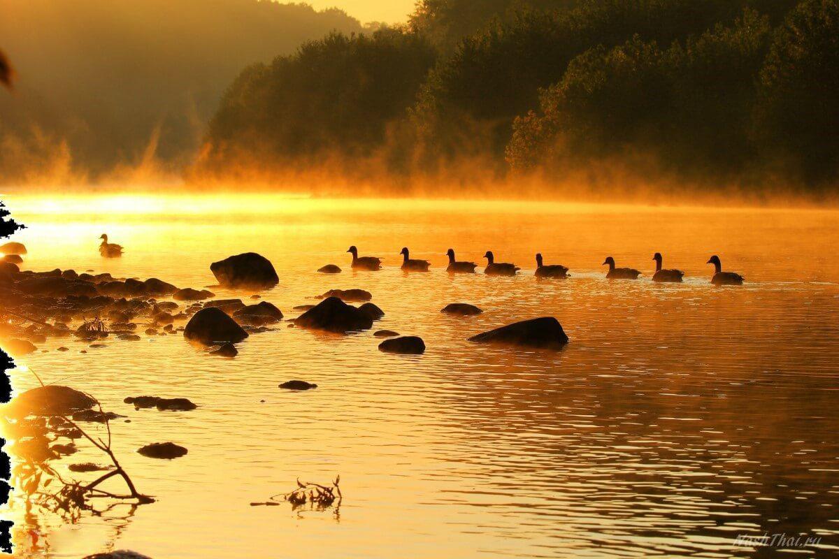 Стайка уток на небольшом озере